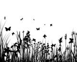 Fototapety grass backgrounds