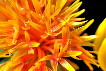 Flower_orange_yellow