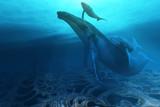 Fototapete Hintergrund - Schön - Meeressäuger