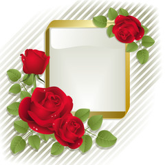 Red roses with gold frame on a white background