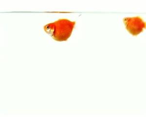 Heureux comme un poisson A2