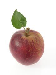Blauacher-Apfel mit Blatt