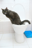 clever cat uses a toilet bow poster