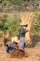travaux des champs en asie