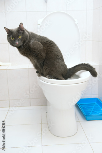 clever cat uses a toilet bow