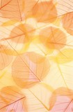 Dry colored leaves - background - Fine Art prints