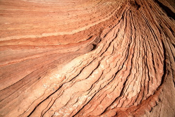 wave - rock formations in Zion National Park, Utah, USA