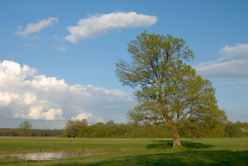 A lone tree on field