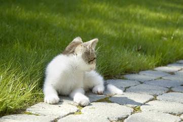 Kleine Katze looking back