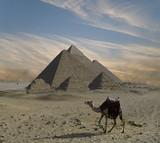 Fototapete Kamel - Sahara - Sonnenauf- / untergang