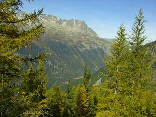 Mountain forest landscape