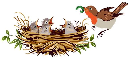 Pettirossi nel nido