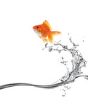 Fototapety goldfish jump