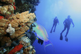Parrotfish and couple Scuba Diving poster