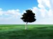 Tree In Green landscape 8