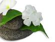 fleurs de pervenches et feuilles de ficus sur galets