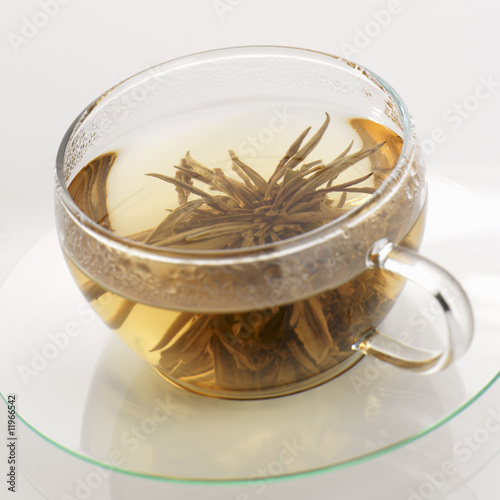tea anemone in glass cup