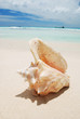 Shell in the Caribbean