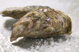 fresh oysters with coarse salt