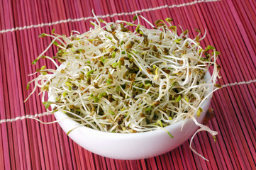 alfalfa sprouts in white bowl
