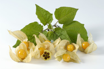 cape gooseberries with flower and leaves