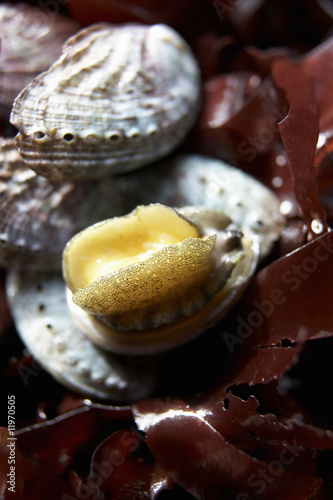 abalone (sea snail) with seaweed