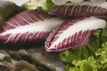 a selection of lettuces and radicchio (detail)