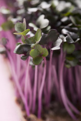 fresh cress (close-up)