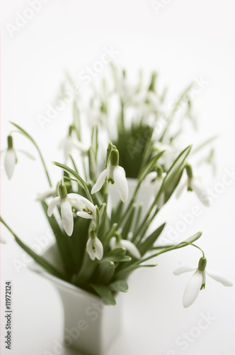 snowdrops in two vases