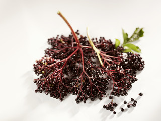 a bunch of fresh elderberries