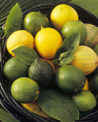 limes and lemons with leaves in a wicker basket