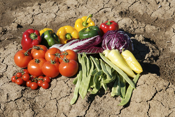 vegetables on dry soil