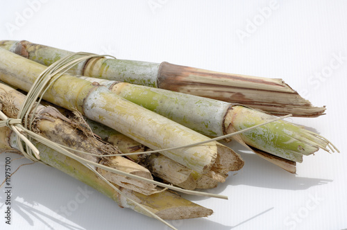 a bundle of sugar cane