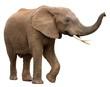 Leinwanddruck Bild - African Elephant Isolated on White