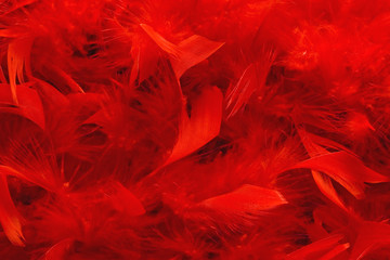 red boa texture full of fluffy feathers