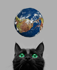 cat playing with earth ball