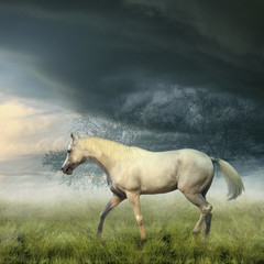 White horse in misty evening
