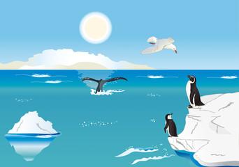 Pinguini al Polo Sud