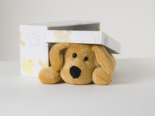 Perro de peluche en caja de regalo