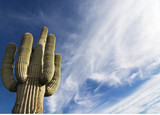 Arizona saguaro with flurry white sky poster