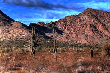 Twin Saguaros