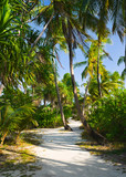 Pathway in tropical jungle poster