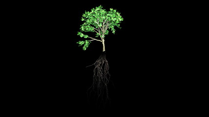 Evolution of a tree with black background