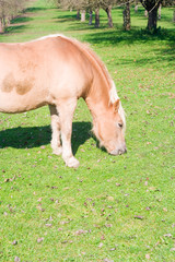 the beautiful horse standing on the meadow