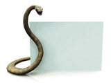 Rattlesnake with blank sign poster