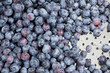 Fresh Washed Blueberries in Colander