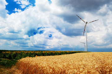 Wind turbines in sunflowers and wheat field before thunderstorm