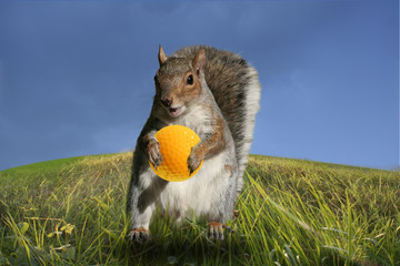The golf squirrel