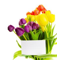 Tulip gift