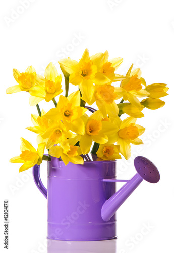 Aluminium Narcis Daffodil Display